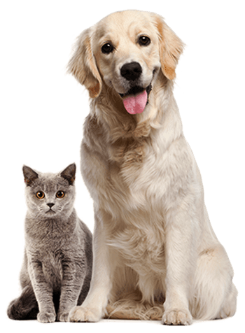 pets about free img
