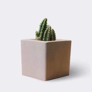 cactus2 free img