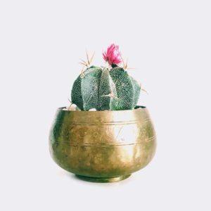 cactus6 free img
