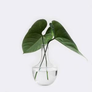 plant1 free img